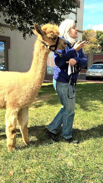 Linda with an alpaca.