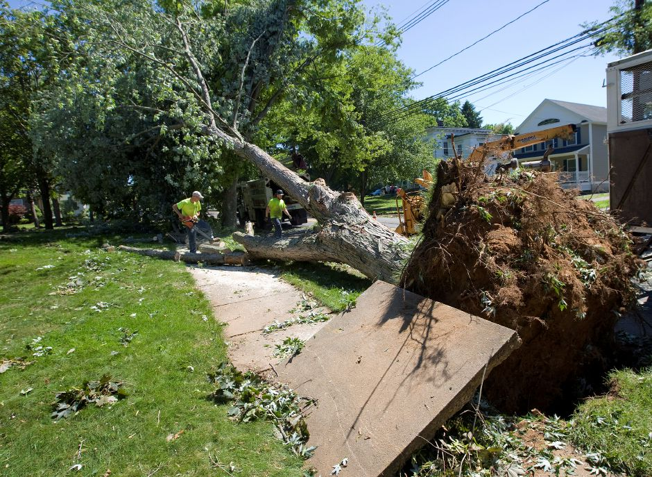 Crews from New Haven based Paradise landscaping & tree removal, work to clear a large tree from the front yard of 353 S. Main St. in Wallingford, Wednesday, June 24, 2015. The fallen tree lifted a sidewalk slab when it toppled over in Tuesday