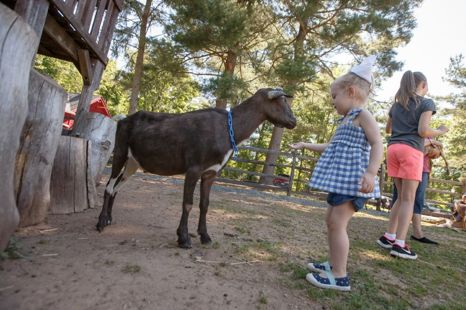 Sunday during an open farm day at Bradley Mountain Farm in Southington July 8, 2018 | Justin Weekes / Special to the Record-Journal