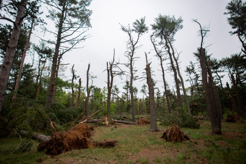 Fallen trees scatter the grounds at Wharton Brook State Park in Wallingford May 16, 2018 after crashing down during the storm Tuesday. Trees could still be heard falling throughout the park on Wednesday. | Richie Rathsack, Record-Journal