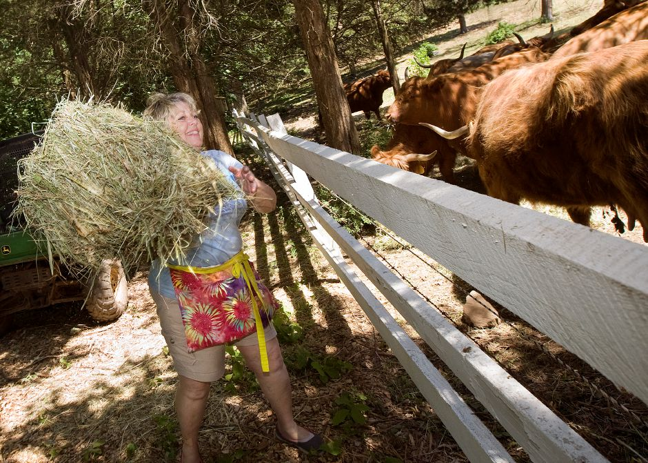 Diane Karabin, owner of Karabin Farms, feeds cows at the family farm on Andrews Street in Southington, Wednesday, June 22, 2016. | Dave Zajac, Record-Journal