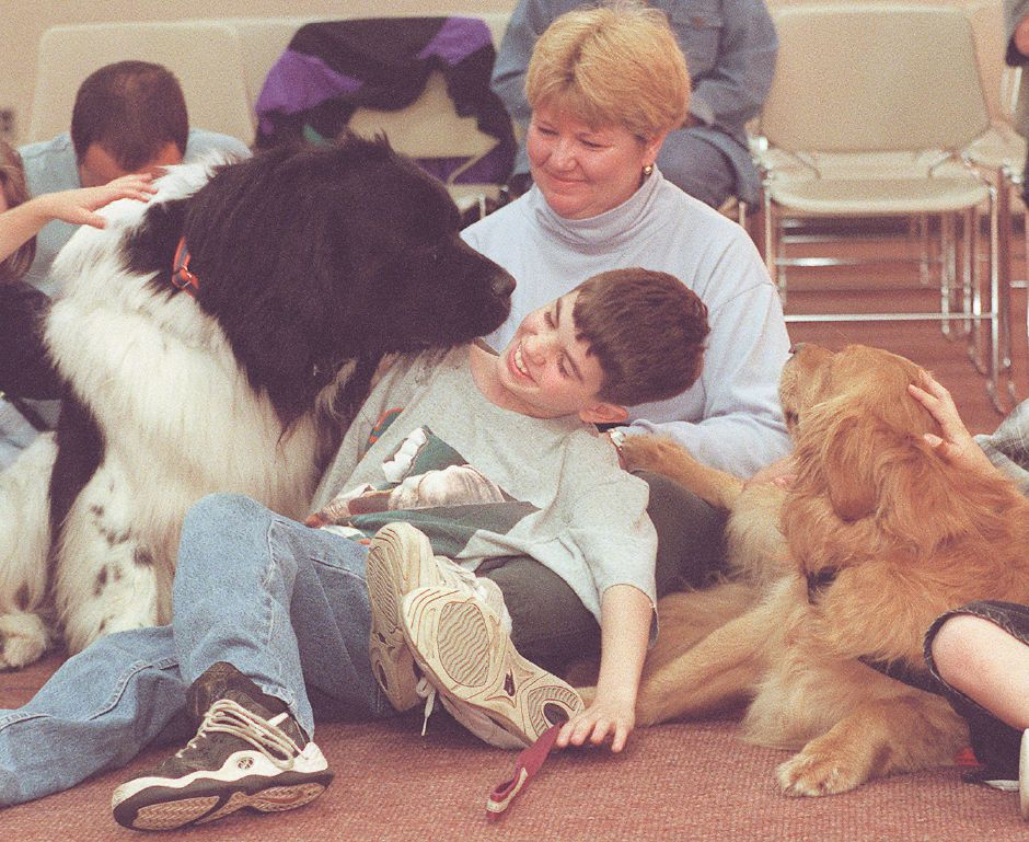 RJ file photo - Bryan Scionti, 11, of Wallingford, has his ear cleaned by Tenni, a 4-year-old Newfoundland, at the Wallingford Public Library May 8, 1998. Abby, right, a golden retriever, Tenni and their owners were giving a search-and-rescue demonstration. Bryan