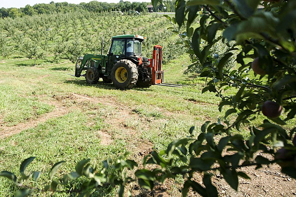 A tractor passes by rows of Apple Trees at Rogers Orchards, Tuesday, Ausust 31, 2010. (Rob Beecher/ Record-Journal)