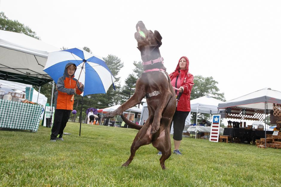 "Jennifer Vargas holds her 5 year old chocolate lab ""Shelby"" as she jumps to catch a tennis ball with Brendan Vargas 9 Saturday during the Pet Fair and 5K in Hubbard Park Meriden June 23, 2018 
