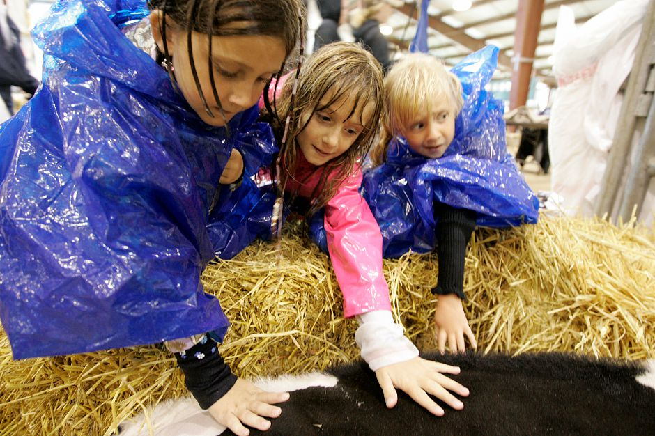 Record Journal Photo/ Johnathon Henninger 9.26.08 - left to right, Lindsay Peach, 7, Jessi King, 7, and Jenni King, 4, all Durham residents pet Vibrant, a Holstein Spring Calf from Greenbackers Farm at the Durham Fair Friday afternoon.