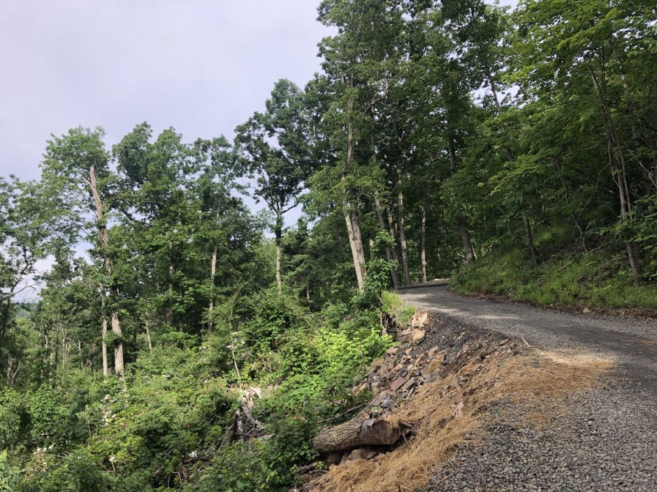 View of the uprooted trees along hte Tower Trail at Sleeping Giant State Park. | Kristen Dearborn, special to the Record-Journal