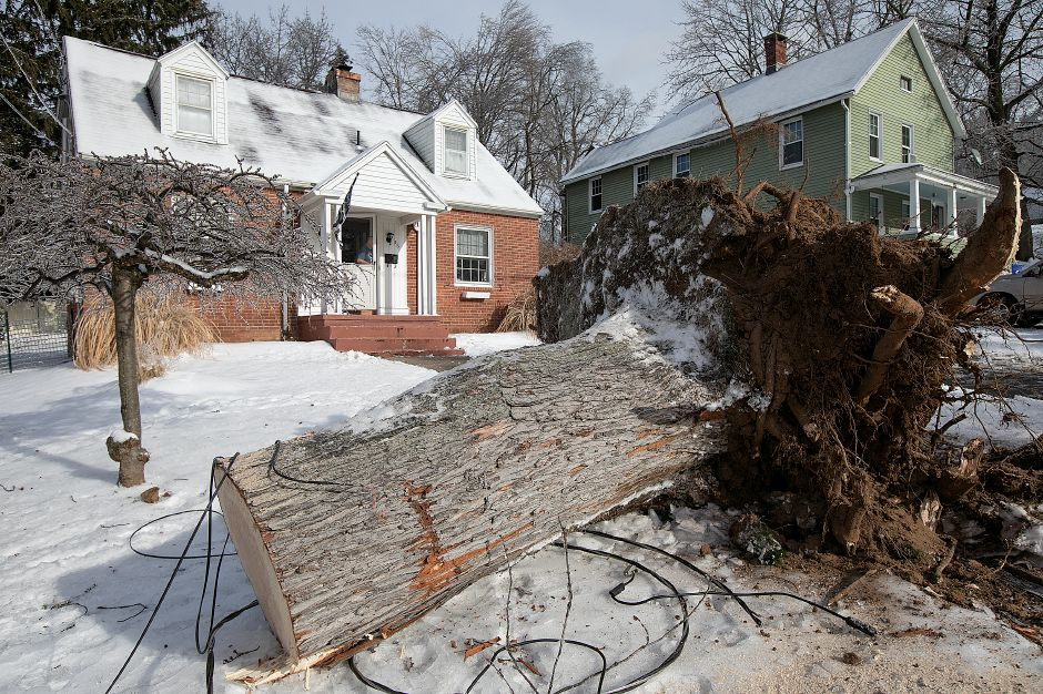 A fallen tree cut in front of 56 Pine St. in Wallingford on Monday.
