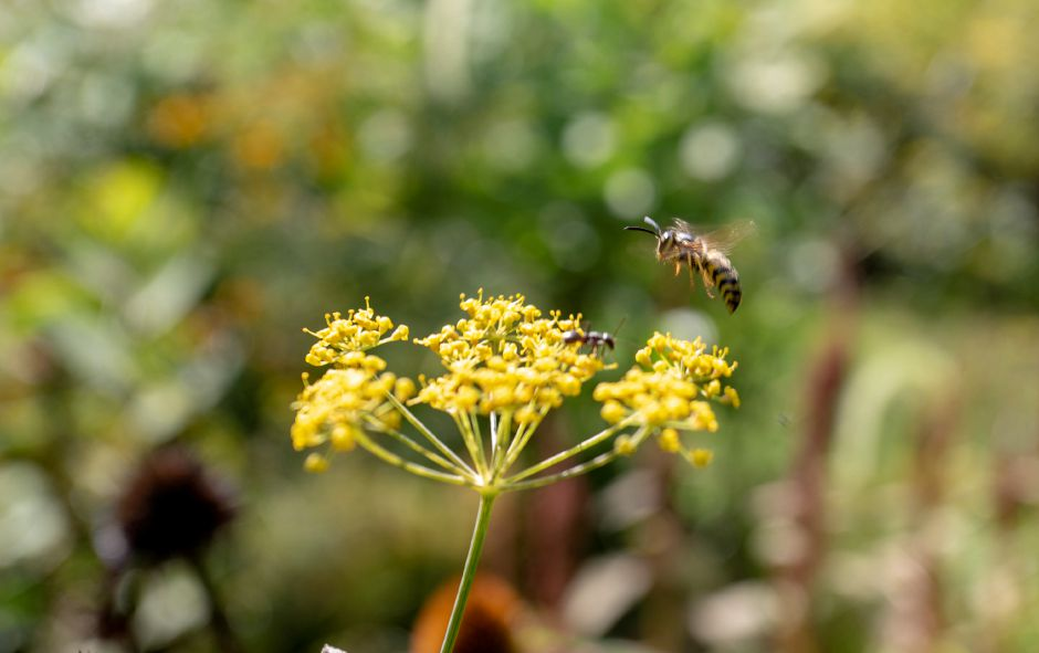 The Quinnipiac River Watershed Association Butterfly and Bee Garden on Oregon Road in Meriden Sept. 3, 2019. | Richie Rathsack, Record-Journal