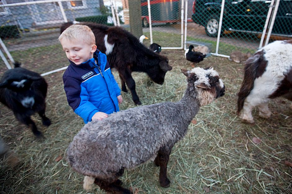 Nicholas Morello, 2, pets a goat while standing near his mother, Chris Morello (not shown) a Meriden resident on South Main Street in Wallingford during the Wallingford Christmas Festival Saturday, December 4, 2010. (Johnathon Henninger/ Record-Journal)