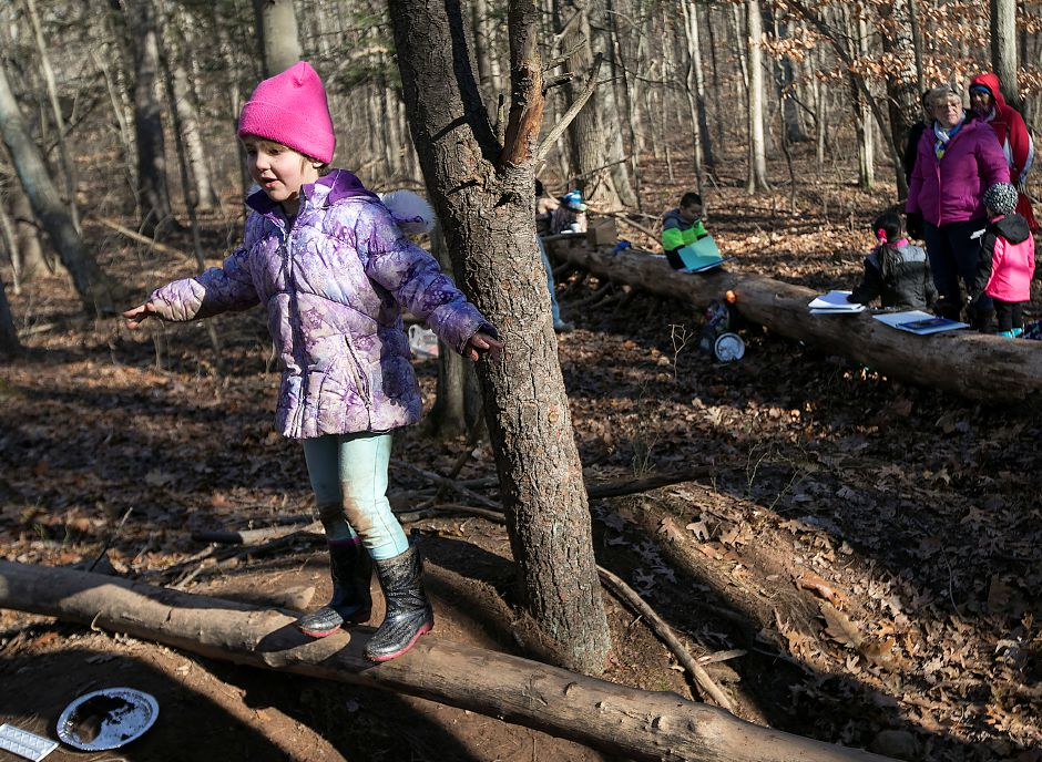Moses Y. Beach Elementary School kindergarten student Ellie Cremo, 6, balances on a limb during the Kinderwoods program at Kohler Environmental Center in Wallingford, Thursday, Dec. 7, 2017. Dave Zajac, Record-Journal