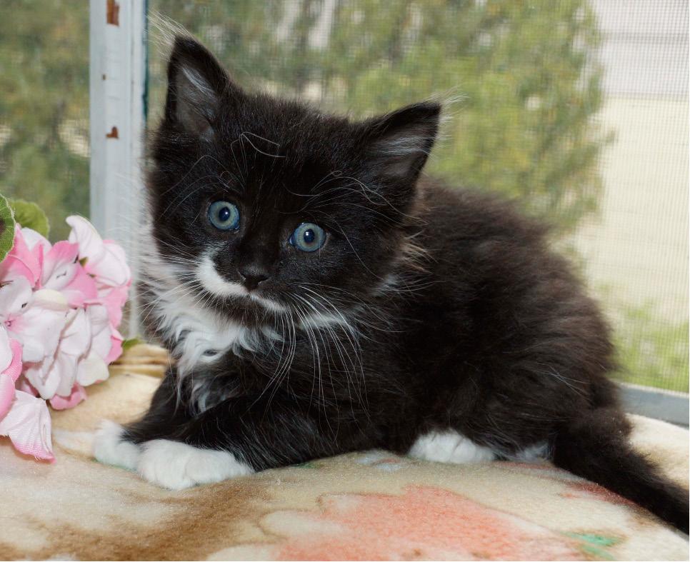 Hearts United Cat Rescue Ct