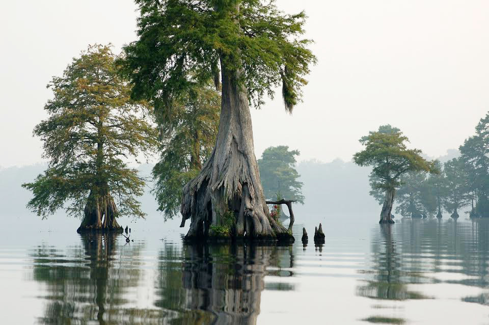 Great Dismal Swamp, N.C.