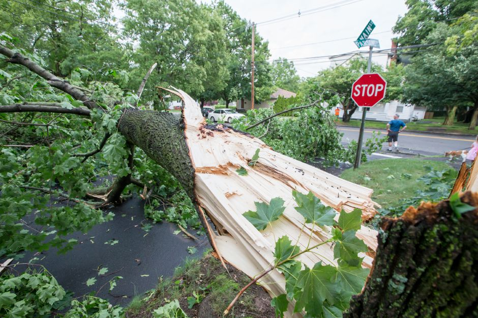 A tree limb blocks Parsons Street after a thunder storm Tuesday in Wallingford Jun. 23, 2015 | Justin Weekes / For the Record-Journal