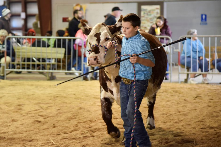 Austin Petow, 12, of Vernon, shows a beef cow at the Durham Fair on Friday, Sept. 28, 2018. | Bailey Wright, Record-Journal