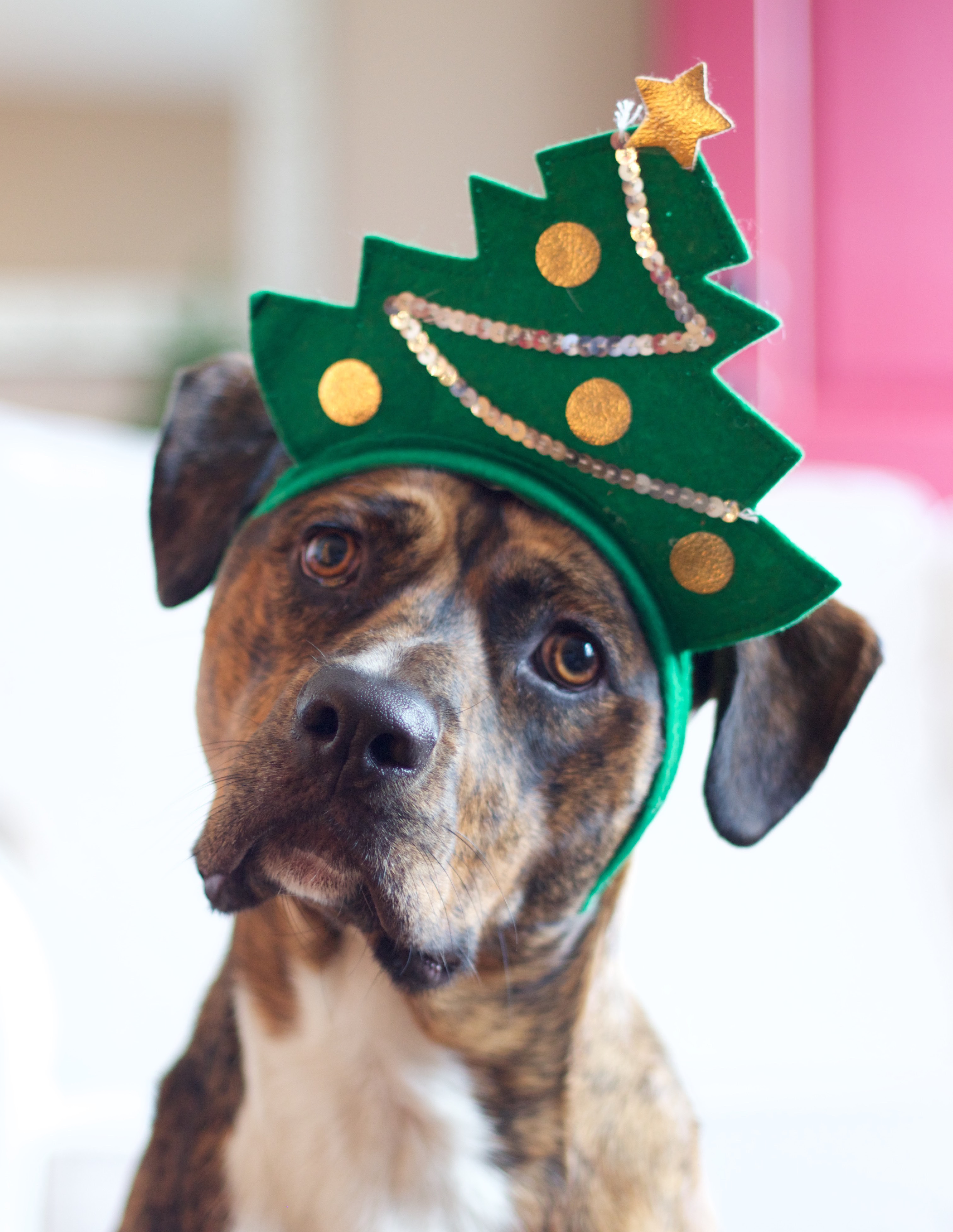 Photos of pets posing in front of a Christmas tree, sitting on