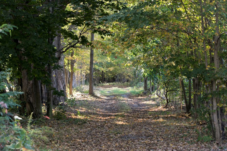 An abandoned extension of Murdock Avenue off Pomeroy Avenue in Meriden, Wednesday, October 18, 2017. Legal questions have arisen regarding ownership of the former road.    | Dave Zajac, Record-Journal