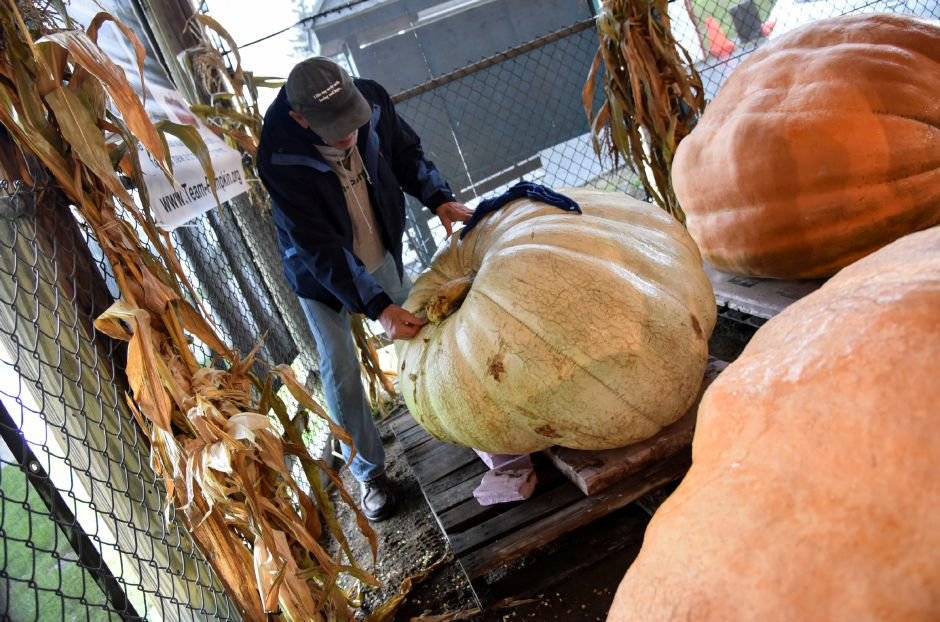 Giant pumpkin grower and Wallinford resident, Bart Toftness, inspects a giant pumpkin entry on Tuesday, Sept. 25, 2018, on the Durham Fairgrounds. | Bailey Wright, Record-Journal