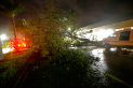 A downed tree lies across Cape Coral Parkway during Hurricane Irma in downtown Cape Coral, Fla., Sunday, Sept. 10, 2017. (AP Photo/Gerald Herbert)