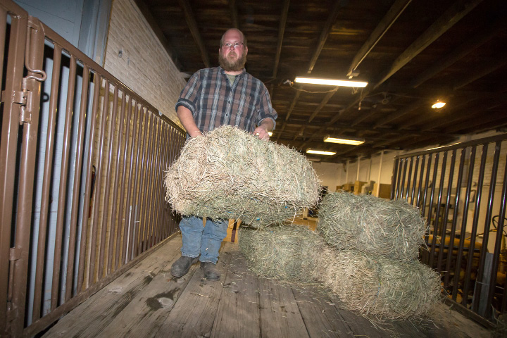 Matt Theriault, of Southington, loads bales of hay into a trailer at Lewis Educational Agricultural Farm on Thursday, preparing for Southington's White Christmas in the Community. | Justin Weekes, Special to the Record-Journal