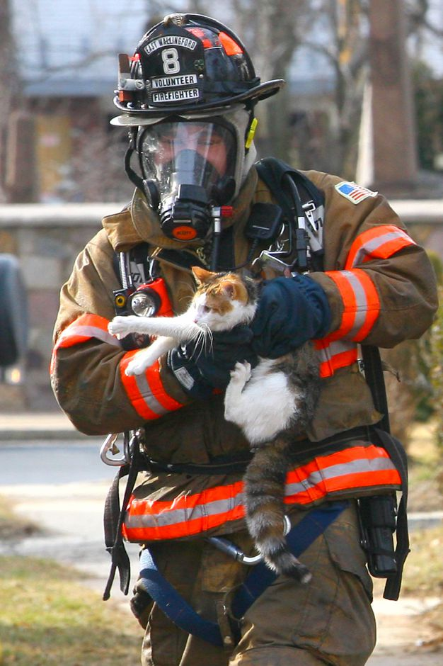 An East Wallingford Volunteer Fire Fighter retreived a cat which lived on the 1st floor of a Wallace Row home which caught fire Tuesday, March 2, 2010. No one was injured.
