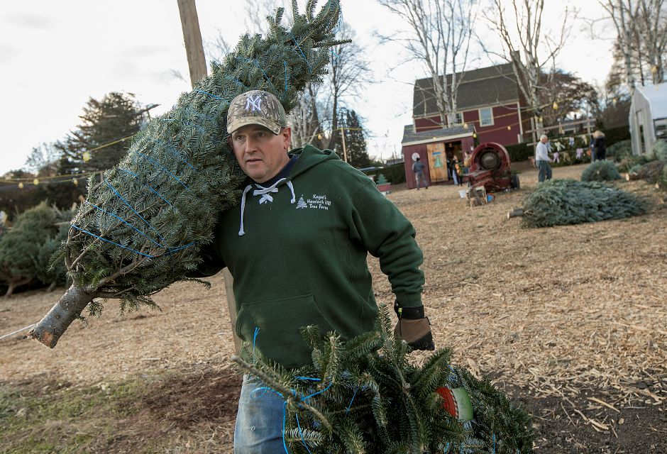B.J. Kogut, operations manager, carries Christmas trees to a customer