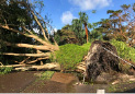 Debris lines a street in Naples, Fla., in the aftermath of Hurricane Irma, Monday, Sept. 11, 2017. Florida Gov. Rick Scott said there