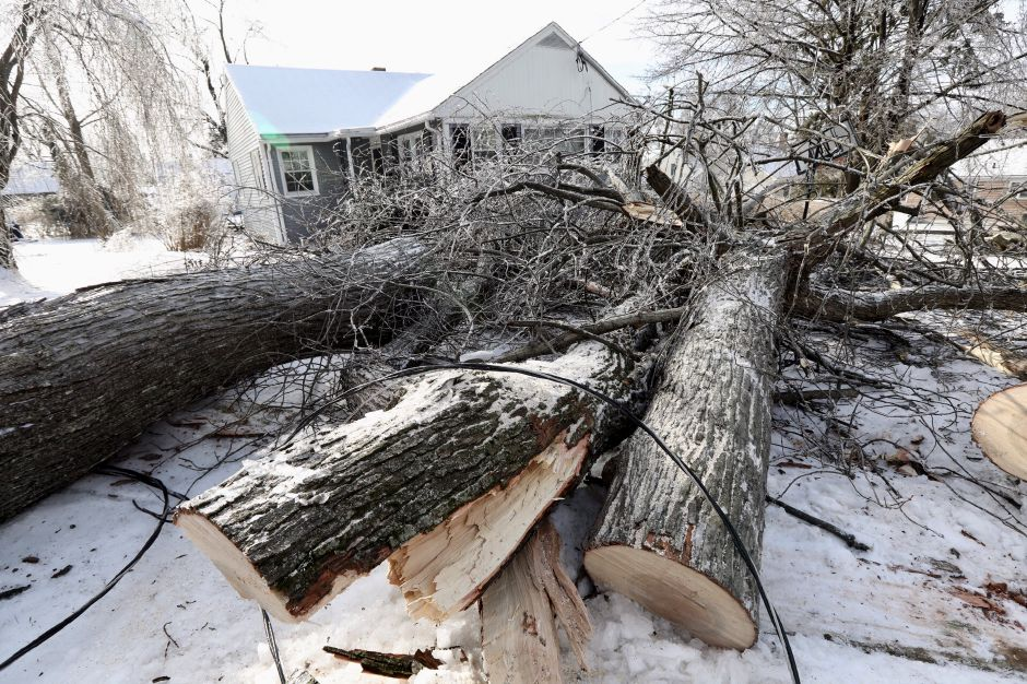 A fallen tree rests in the front yard of 45 Pine St. in Wallingford.