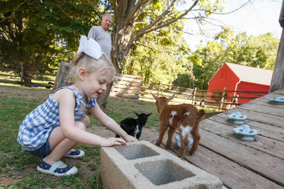Luna Boehringer 2 of Plainville crouches to pet two baby Norwegian Dwarf goats Sunday during an open farm day at Bradley Mountain Farm in Southington July 8, 2018 | Justin Weekes / Special to the Record-Journal