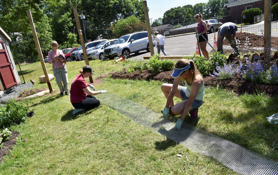 The Durham-Middlefield Giving Garden, behind the community center on Main Street, on June 14, 2019. Volunteers are welcome every Saturday from 9 a.m. to noon. | Bailey Wright