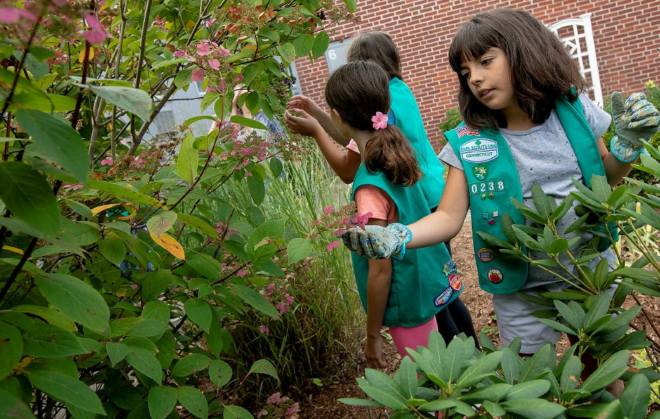 Girl Scout Kayla Dwyer, 10, right, looks over pink hydrangea petals with fellow scouts in a new garden the troop is planting at Norton Elementary School in Cheshire, Wed., Sept. 18, 2019. Girl Scout Junior troop 60238 took on the project in hopes of earning the Girl Scout Bronze Award, the highest honor a Girl Scout Junior can achieve. Dave Zajac, Record-Journal