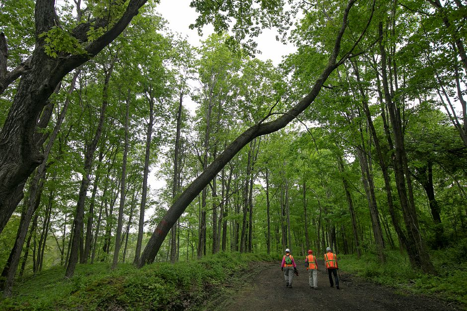 Left to right, Conservation Commission member Dianne Saunders, Conservation Commission member Dianne Lendler and volunteer Erik Severson, of Wallingford, walk down a road in the Tyler Mill Preserve in Wallingford after clearing brush, Fri., May 17, 2019. Visitors will see dramatic differences next week to the landscape of Tyler Mill Preserve, which is slated to reopen after being closed for a year. Dave Zajac, Record-Journal