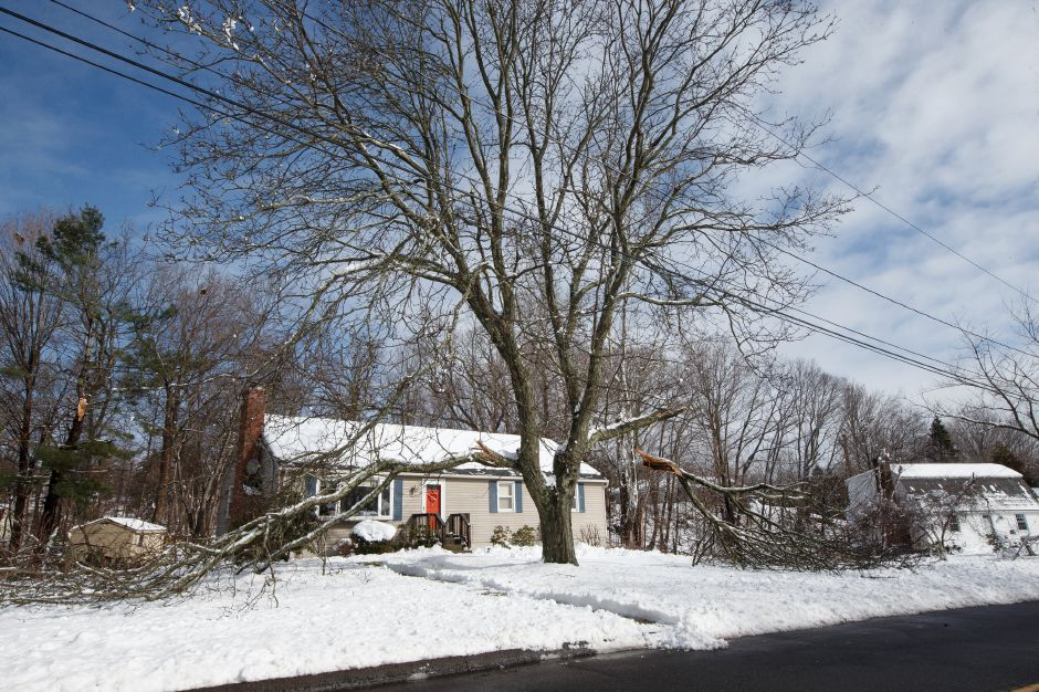Tree limbs fell due to the heavy snow on Mansion Ave in Wallingford Thursday during a winter storm clean-up March 8, 2018 | Justin Weekes / Special to the Record-Journal