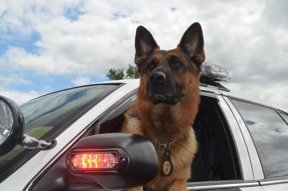 Berlin Police Department's K9 Titan.