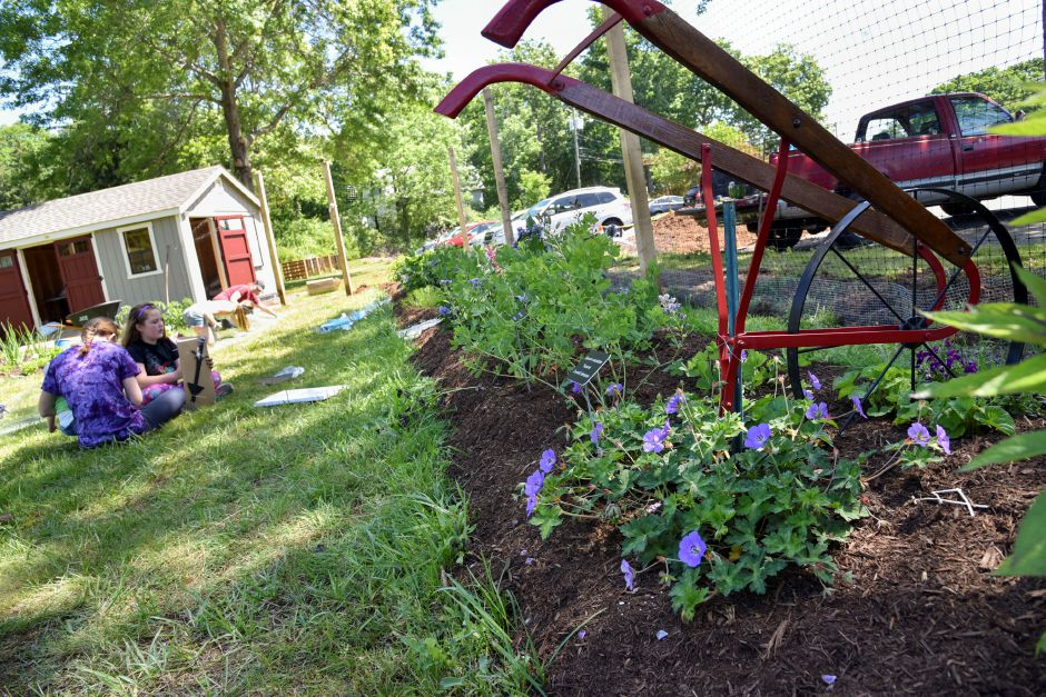 The pollinator patch at Durham-Middlefield Giving Garden was created to attract bees and wasps to help the vegetables grow, pictured on June 14, 2019. Volunteers are welcome every Saturday from 9 a.m. to noon. | Bailey Wright
