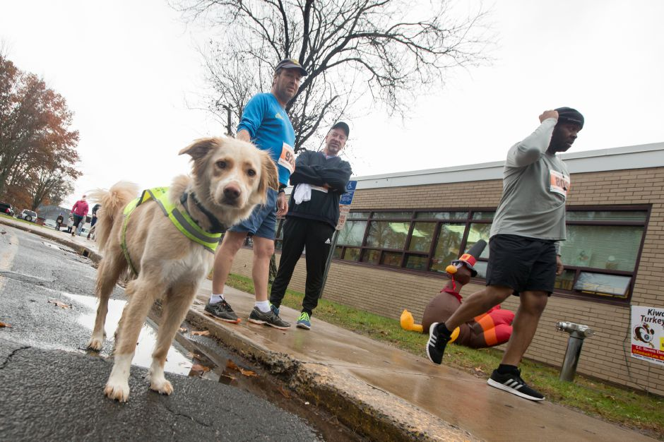"Bob Tumisk of Wallingford hold his running partner ""Brady"" a 2 year old mix with Ed Bobins of Wallingford Sunday during the Kiwanis Club 5 mile and 5K Turkey Trot Road Race at Stevens Elementary School in Wallingford November 19, 2017 
