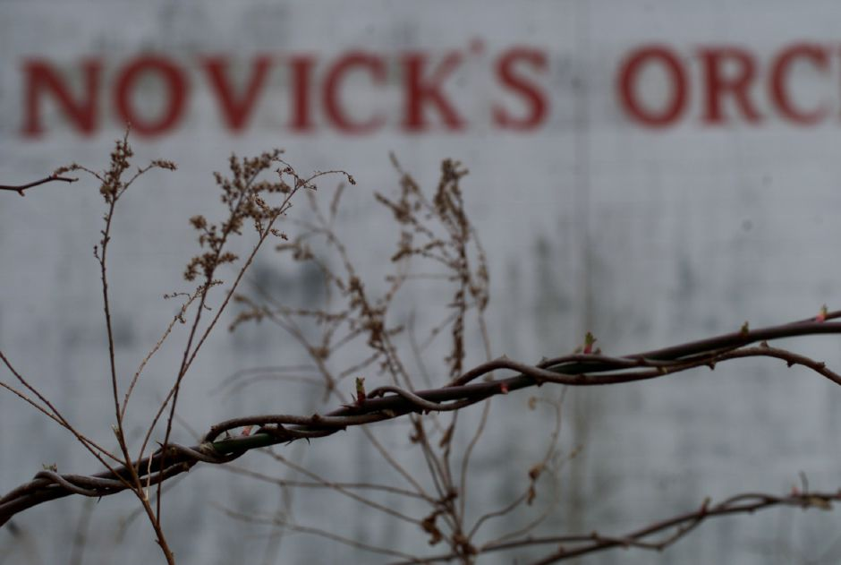 A tangle of weeds surrounds the defunct Novick
