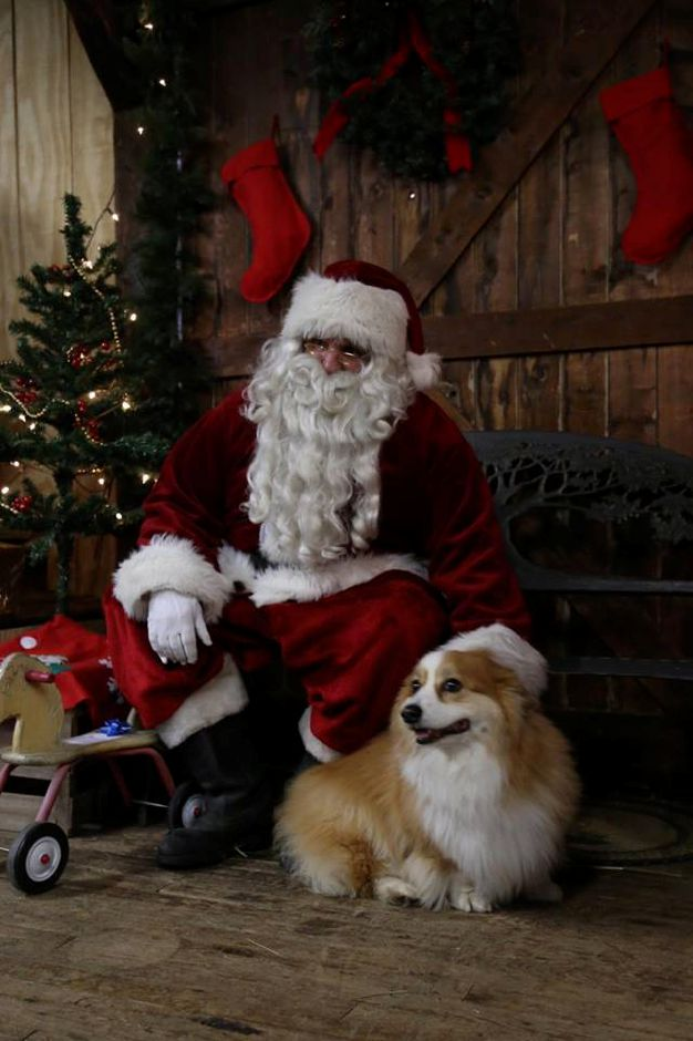 Pet pictures with Santa from Santa's Express at A.S Labieniec Pet Supply in Berlin, Saturday, Dec. 2. |Kensington Fire Rescue