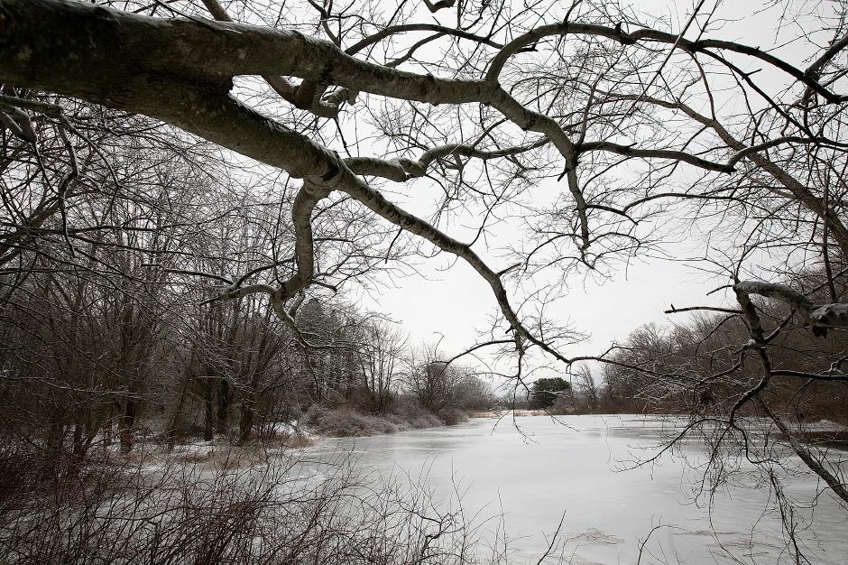 A small pond on the Curtiss Farm property located between Blatchley Avenue and South End Road in Southington, Wed., Jan. 23, 2019. Town leaders are hoping to minimize the loss of trees during sewer line installation work on the Curtiss Farm property. Dave Zajac, Record-Journal