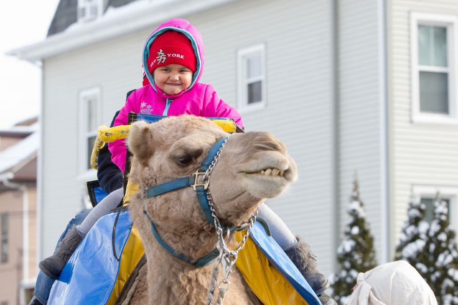 Christina Valez 5 takes a ride on a camel Sunday during the Three Kings Day Celebration at the Meriden Public Library in Meriden Jan. 8, 2017 | Justin Weekes / For the Record-Journal