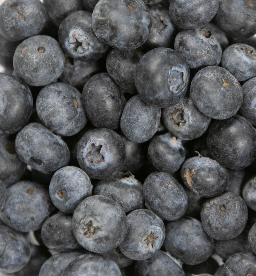 Blueberries rich in flavor and vitamins to help ward off illness during cold and flu season, Mon., Nov. 19, 2018. Dave Zajac, Record-Journal