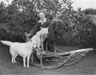 Leonhard Seppala, 74, famous Alaska dog musher, poses with his dogs Kotzebue and Sep and the sled on Oct. 22, 1951, with which he won the marathon race (26 miles, 385 yards) in 1 hour, 50 minutes and 25 seconds. Seppala has donated the sled to a Norwegian museum. The Sled, which Seppala made, is constructed of hickery and birch with extensions on the rear runners to skim over the Tundra. It will be exhibited in Oslo with pickaxes, gold pans, wagons and weapons used by emigrants from Norway. (AP Photo)