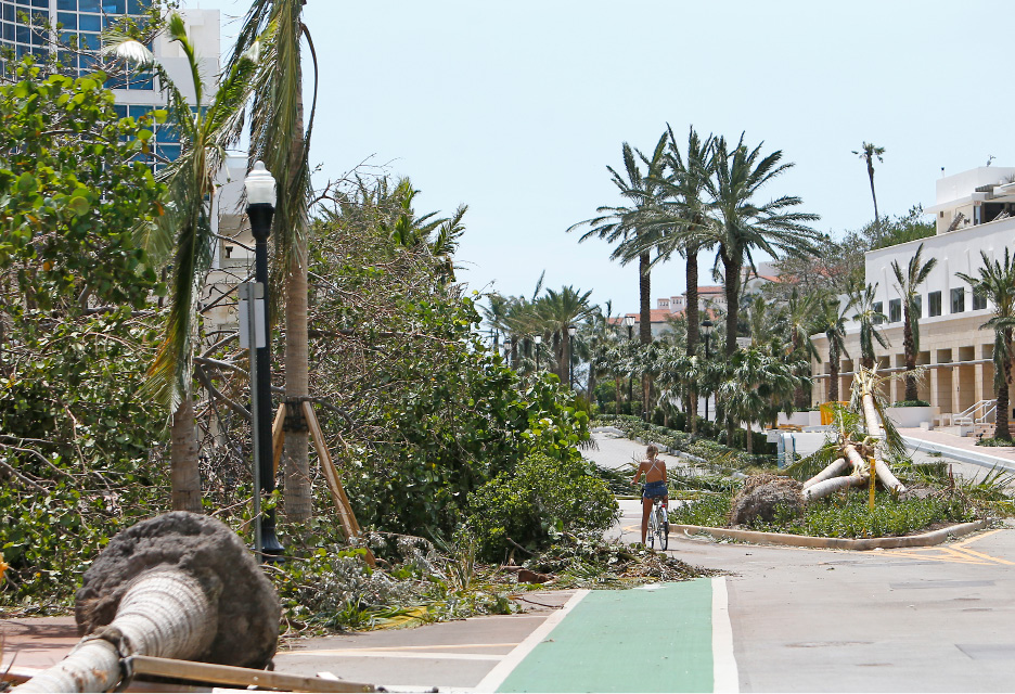A woman rides a bike next a fallen trees and palm tree at South Pointe Park on Miami Beach, Fla., in the Hurricane Irma aftermath Monday, Sept. 11, 2017. (David Santiago/Miami Herald via AP)