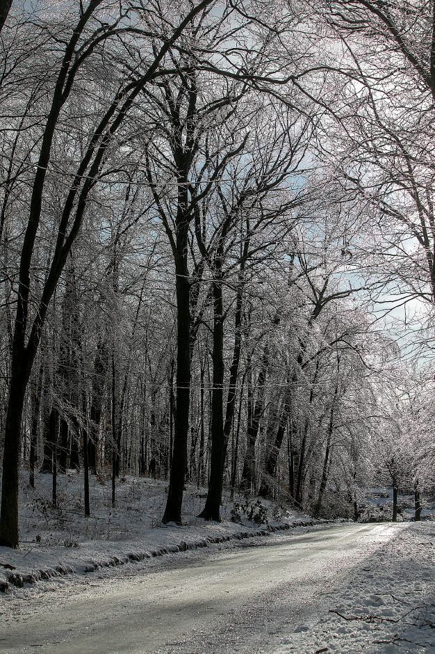 Trees glisten with ice crystals at Hubbard Park in Meriden, Mon. Jan. 21, 2019. Dave Zajac, Record-Journal