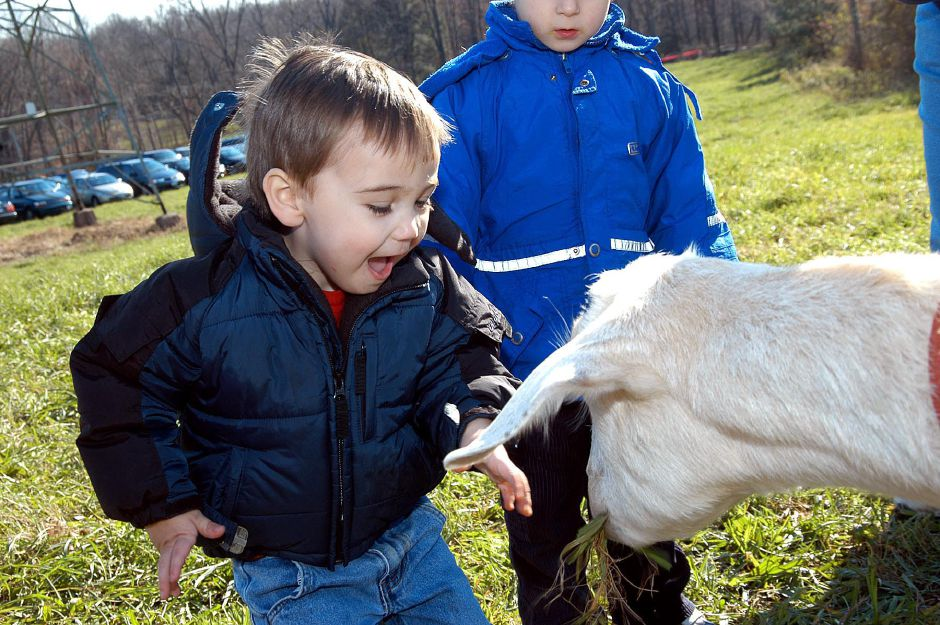 Two-year-old Michael Alves has some fun feeding the goats at the Francisean Life Center