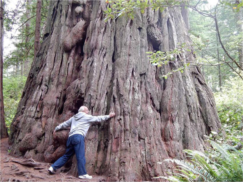 Jack Brooks vs. redwood tree.