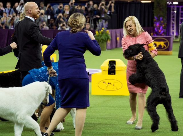 Ty, a Giant Schnauzer, right, is hugged by handler Katie Bernardin after winning the working group during the 142nd Westminster Kennel Club Dog Show, Tuesday, Feb. 13, 2018, at Madison Square Garden in New York. (AP Photo/Craig Ruttle)