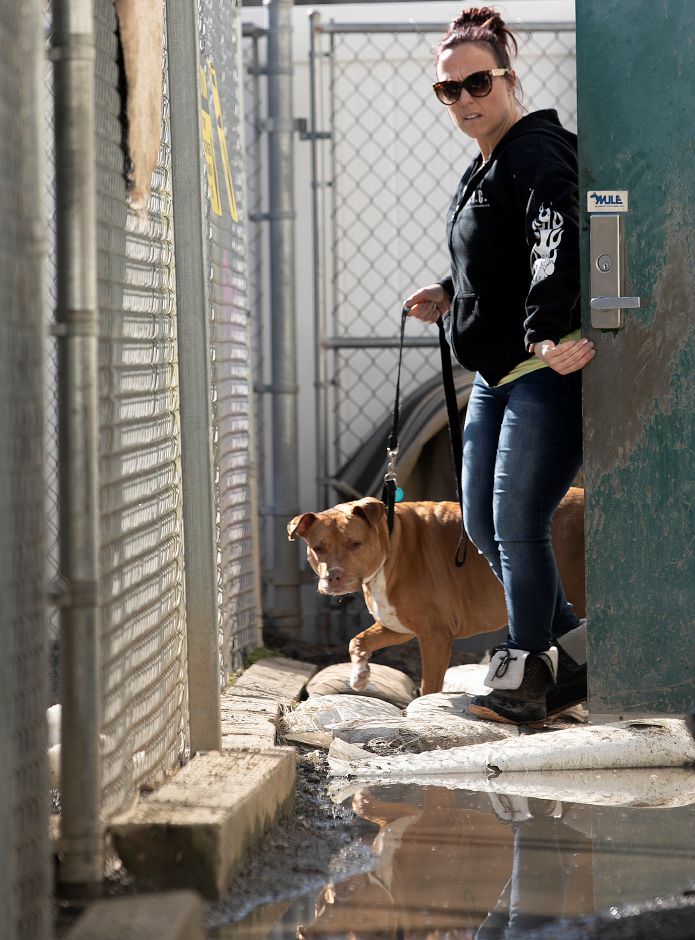 Rebecca Campochiaro, dog attendant, looks over flooding while taking Pit bull Ginger to her dog kennel at the Meriden Humane Society, Mon., Mar. 11, 2019. Eversource has donated funds to resolve the recurrent flooding issue in the kennel area. Dave Zajac, Record-Journal