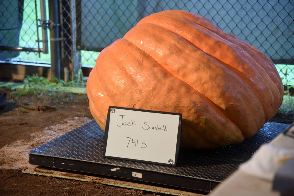 on delivery and weigh-in day on Tuesday, Sept. 25, 2018, on the Durham Fairgrounds. The pumpkins will be available for viewing all weekend during the fair. | Bailey Wright, Record-Journal
