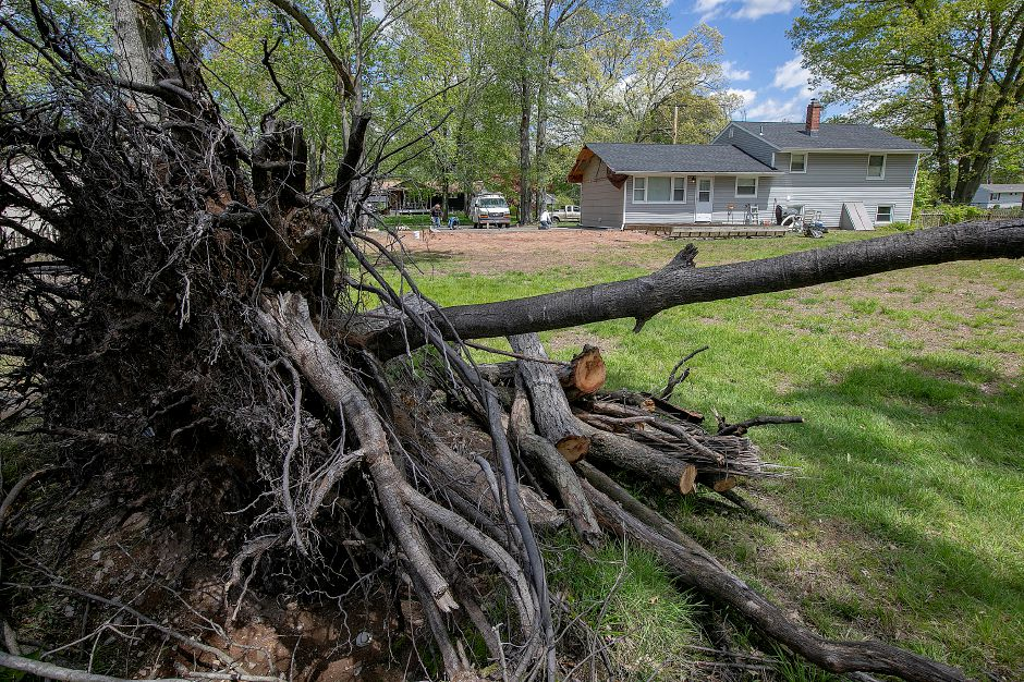 The roots of a downed tree from last year's microburst remain in the backyard of a residence at 21 Birch Drive in Wallingford on  Wednesday. See more photos online at myrecordjournal.com Photos by Dave Zajac, Record-Journal