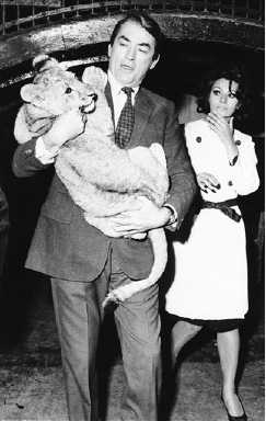 "Acting as if it's a routine affair, actor Gregory Peck carries an eight-month-old lion club at the London Zoo  August 31, 1965, but co-star Sophia Loren shows her doubts about this extra-curricular role. They are in London shooting a film, ""Arabesque."" (AP Photo)"